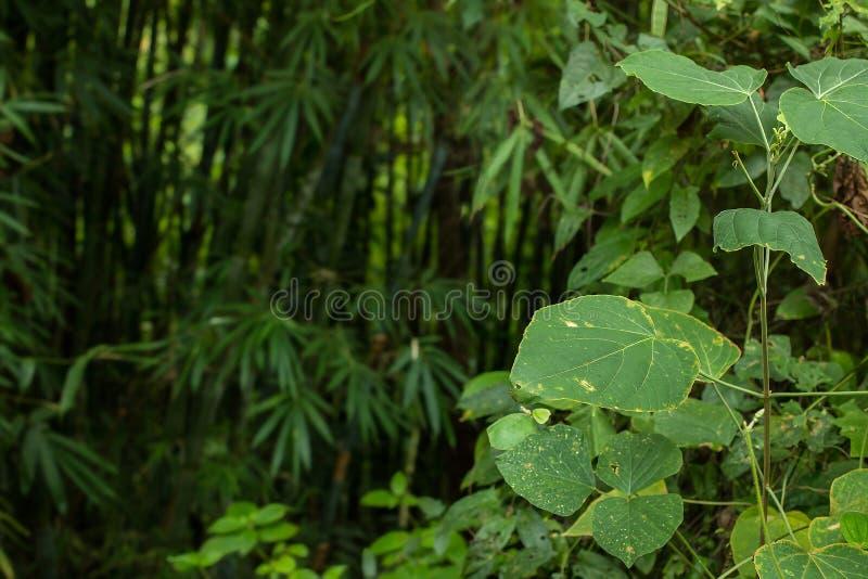 密林绿叶以明亮的开放植物和黑暗的sha对比  库存图片
