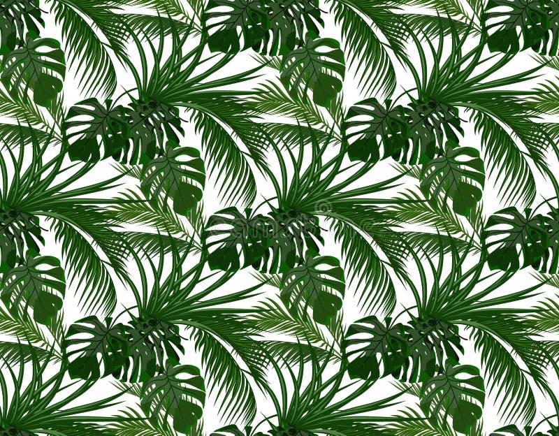 密林 热带棕榈树, monstera,龙舌兰绿色叶子  无缝 背景查出的白色 例证 皇族释放例证