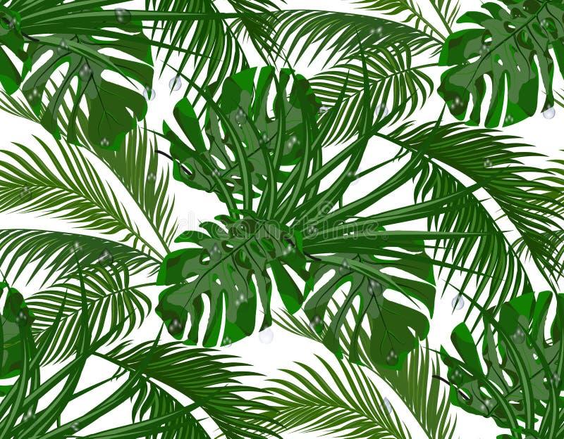 密林 醉汉绿色 热带棕榈树, monstera,龙舌兰叶子  无缝 背景查出的白色 皇族释放例证