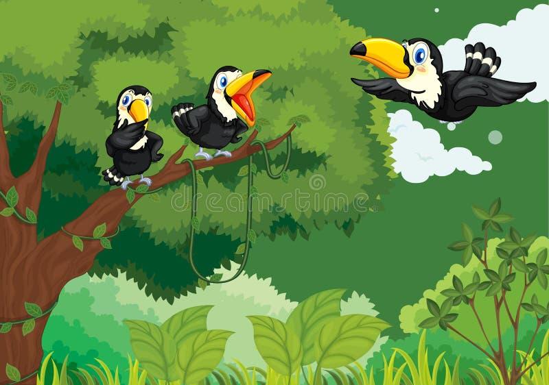 密林toucans 向量例证