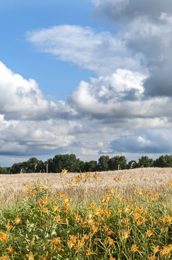 密苏里美国农厂麦田 免版税库存照片