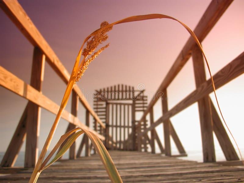 密西西比码头芦苇 免版税库存照片