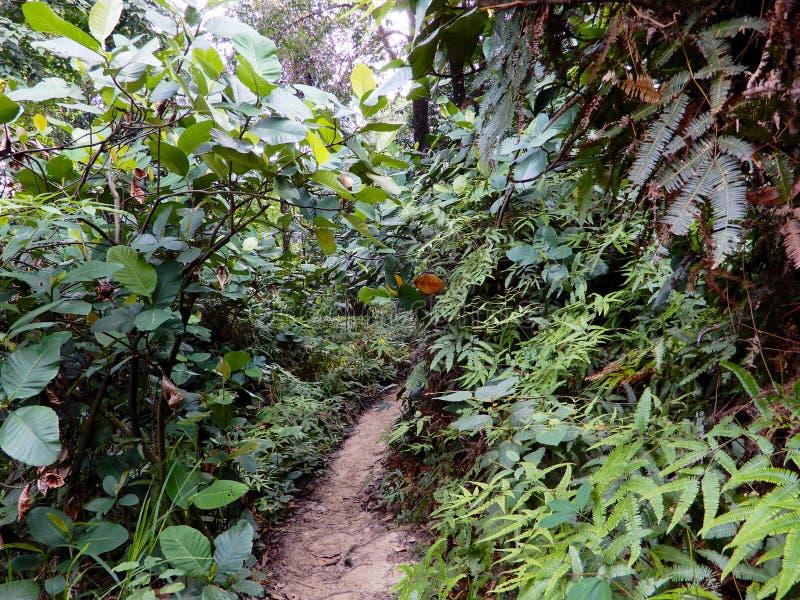 密集的树在森林里 免版税图库摄影