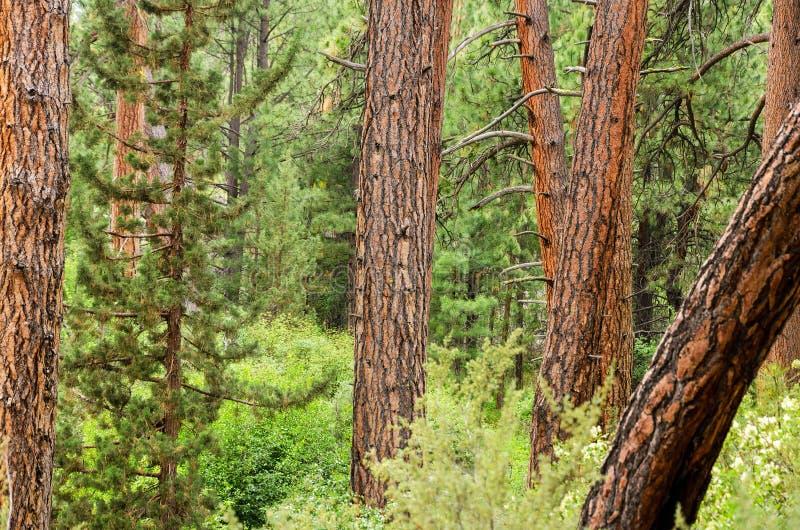 密集的森林视图 库存图片
