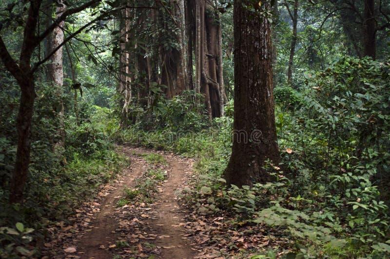 密集的森林道路 免版税库存照片