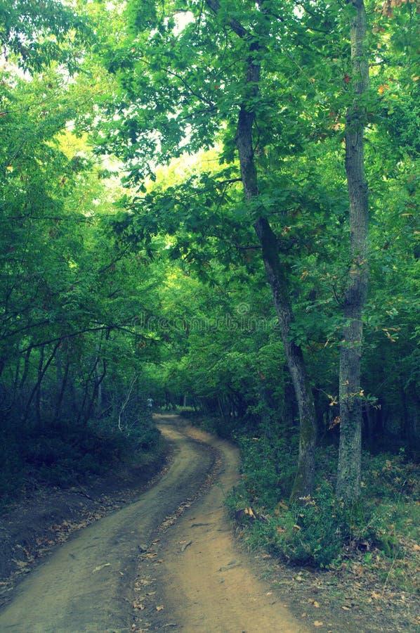 密集的森林道路 免版税库存图片