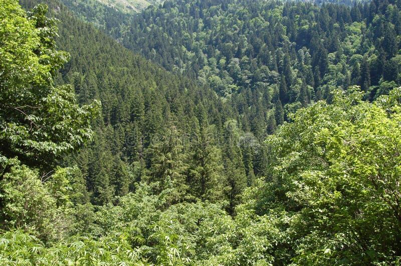 密集的森林 免版税库存图片