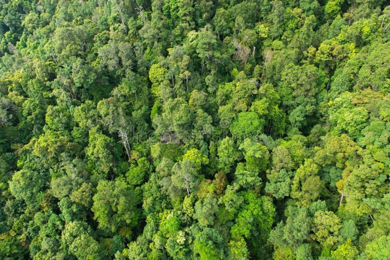 密集的热带雨林在马来西亚 库存照片