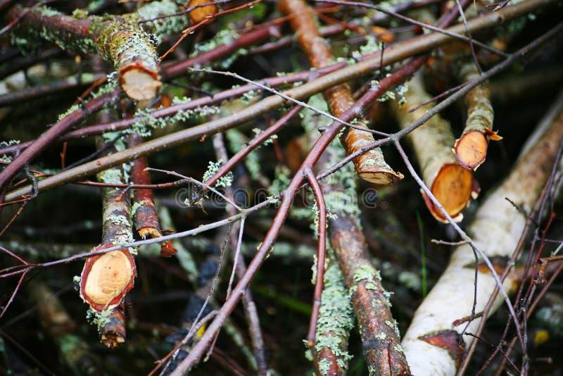 从密集的branches.brushwood的背景 背景美好的草丛横向 如毛刷 下木,草丛,丛林,小灌木林, 库存图片