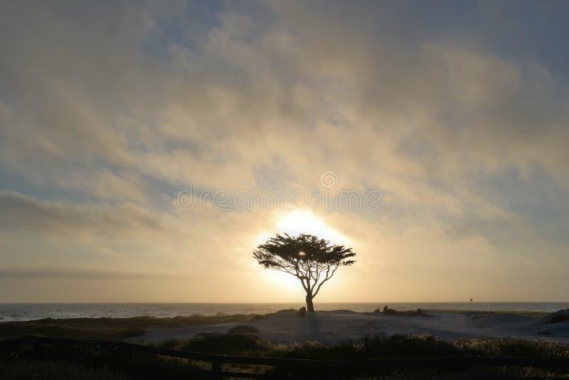 富启示性的假日天际纯净的自然瑜伽树 免版税库存照片