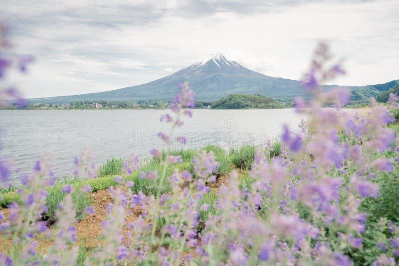 富士从kawaguchiko湖边的山景 免版税库存图片