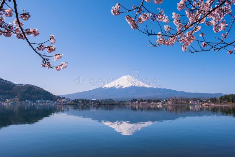 富士山和樱桃树 库存图片