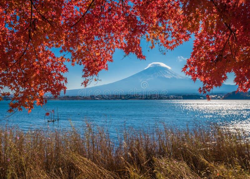 富士山和秋天槭树叶子, Kawaguchiko湖,日本 库存照片