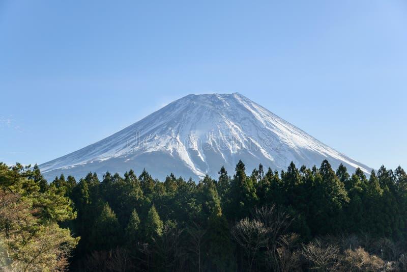 富士山看法有绿色杉树一个美丽的前景的,日本 免版税库存图片