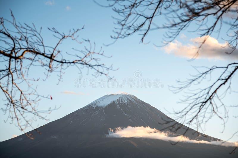 富士山通过树分支  库存图片