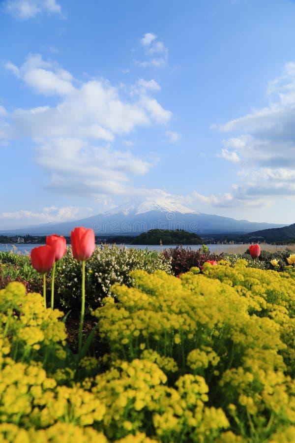 富士山,从湖Kawaguchiko的看法 库存照片