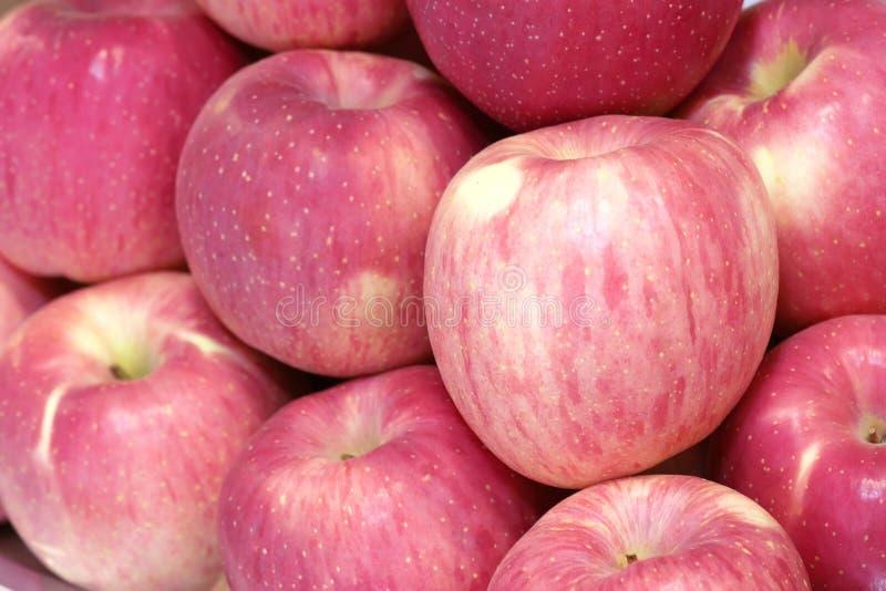 富士苹果 库存照片
