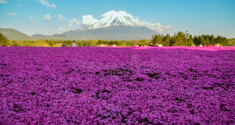 富士Shibazakura在日本 免版税库存照片