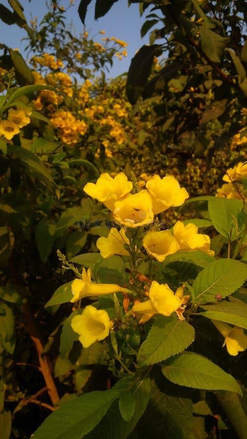 寒冷的黄色花 免版税库存照片