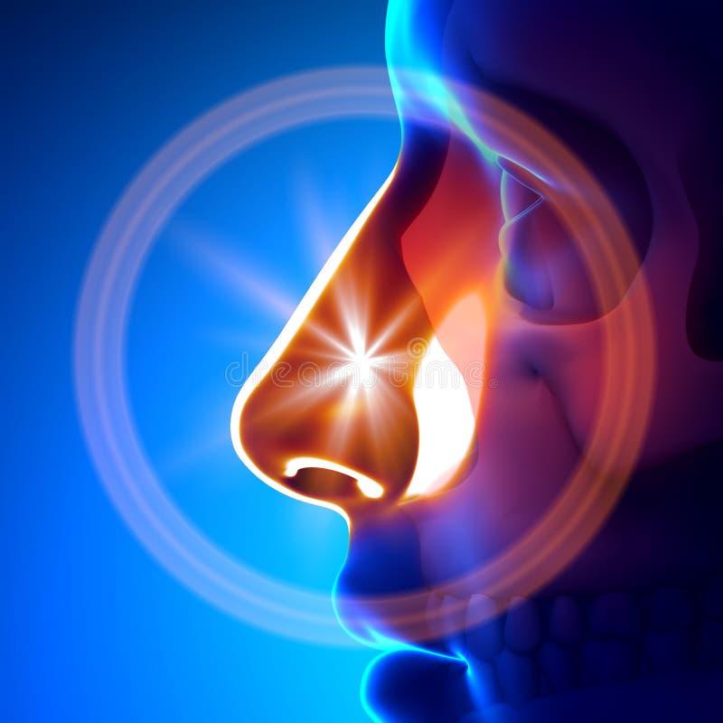 寒冷/流感-充分的鼻子 向量例证