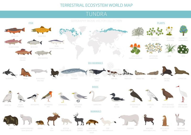 寒带草原生物群系 地球生态系世界地图 北极动物、鸟、鱼和植物infographic设计 库存例证