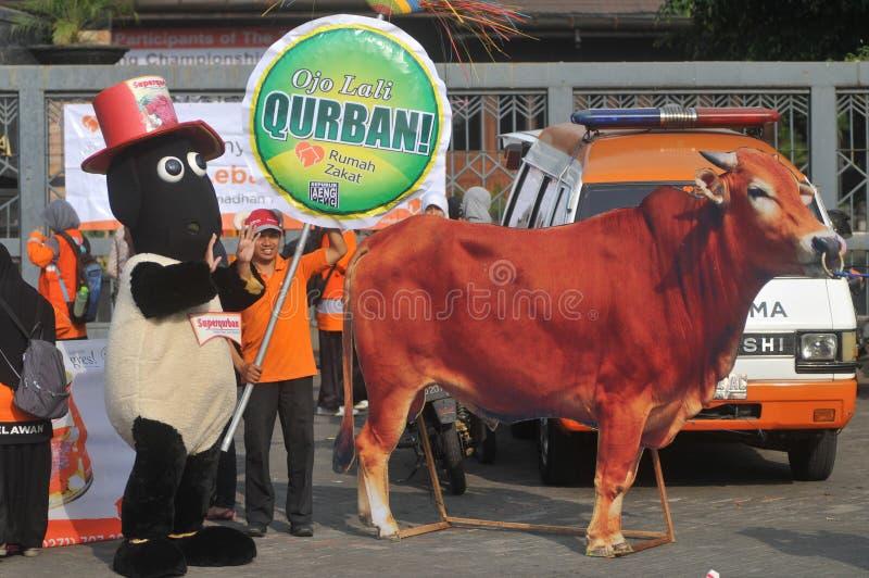 对'牺牲的'一次竞选在Eid AlAdha庆祝前在印度尼西亚 免版税库存照片