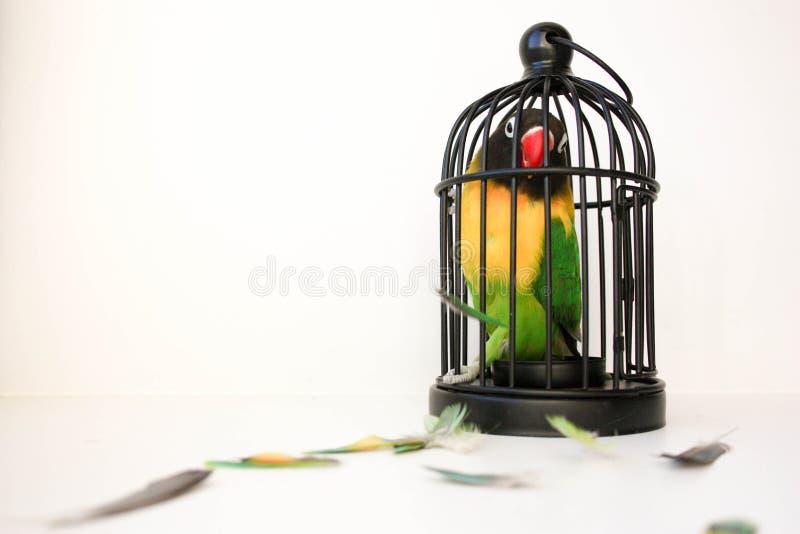 对一个封闭空间概念的恐惧 一只鸟 库存照片