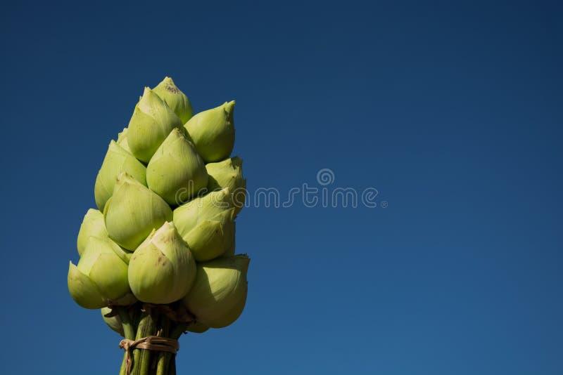 对一束莲花寺庙美丽的蓝天 图库摄影