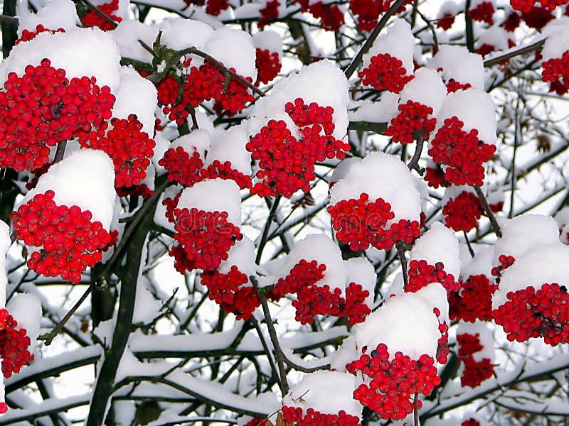 对下面的雪我们更加温暖 免版税库存照片