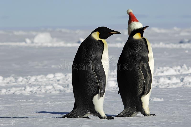 对企鹅xmas