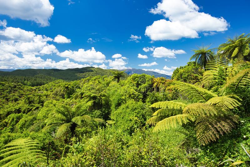 对原野的风景视图有树蕨和天空蔚蓝的在明亮的颜色,新西兰 图库摄影