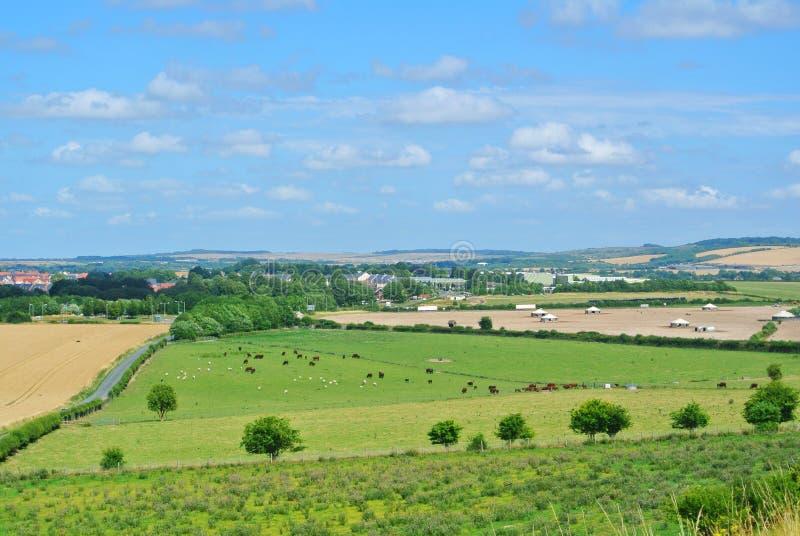 对吃草在农田的母牛和绵羊领域和牧群的一个看法在老萨勒姆,萨利附近 免版税库存照片