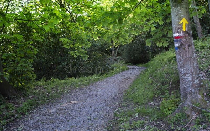 对圣詹姆斯camino de圣地亚哥方式的显示箭头  库存照片