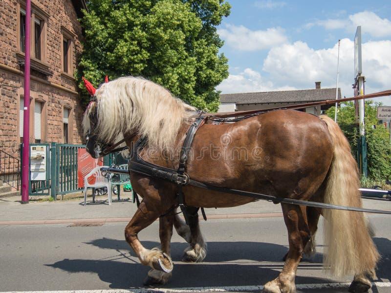 对在德国镇街道上的浅褐色的工作的马在假日游行期间的啤酒节日星期 免版税库存图片