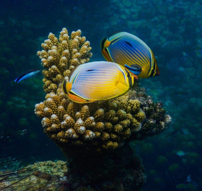 对在美丽的深大海的鱼 库存图片