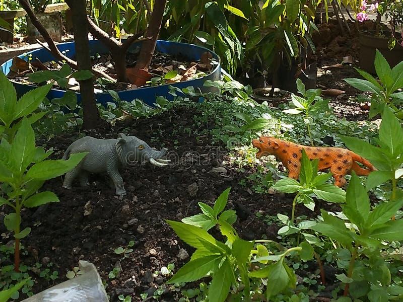 对大象的老虎攻击 库存照片