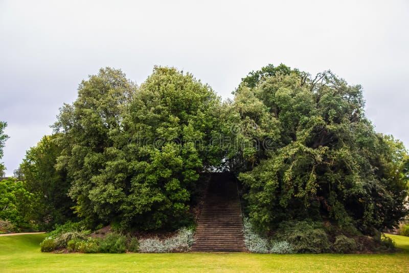 对天堂的楼梯或无处-老愚蠢在英国-用树和台阶盖的土墩在美丽的绿色草坪冠上 免版税库存照片