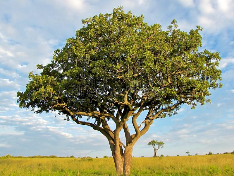 对天际的树 免版税库存照片