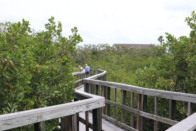 对密林的木桥主角 木足迹 木板走道 在水的一个船坞在印度岩石海滩在缓慢的自然保护区,弗洛尔 免版税库存图片