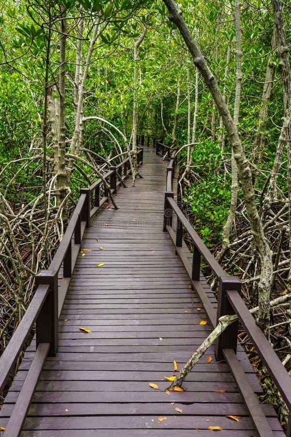 对密林的木桥, Prachuap Khiri Khan,泰国 免版税库存图片