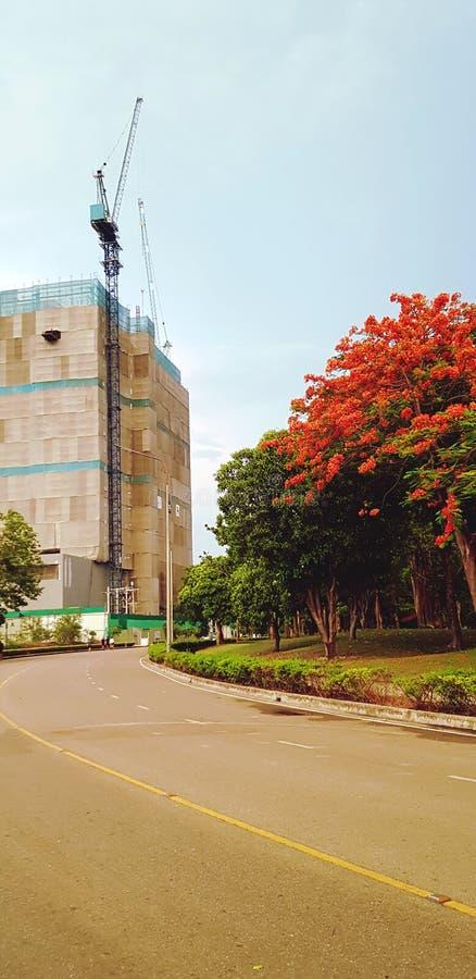 对建筑大厦的美好的曲线十字架与起重机和大红色或橙色花树 库存图片
