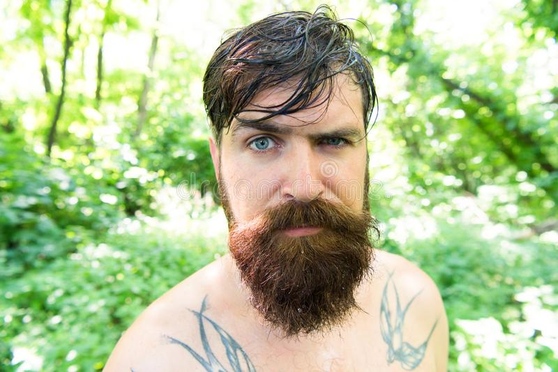 对待您的头发今天 有湿油腻的头发的有胡子的人在自然环境 长毛的行家佩带的形状的胡子和 库存照片