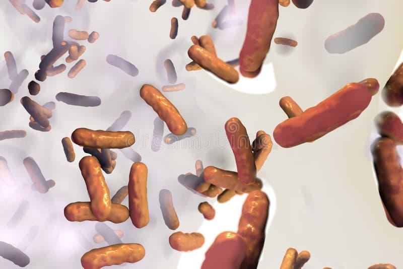 对抗抗生素的细菌绿浓杆菌生物薄膜  库存例证