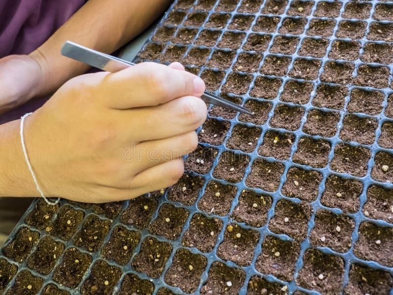 对播下种子的方法 图库摄影