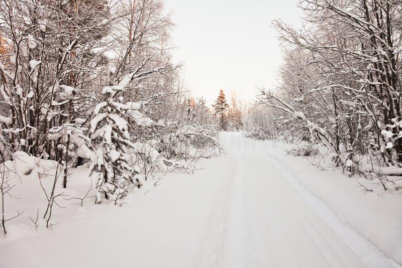 对木头的包括的横向北路雪 免版税库存照片