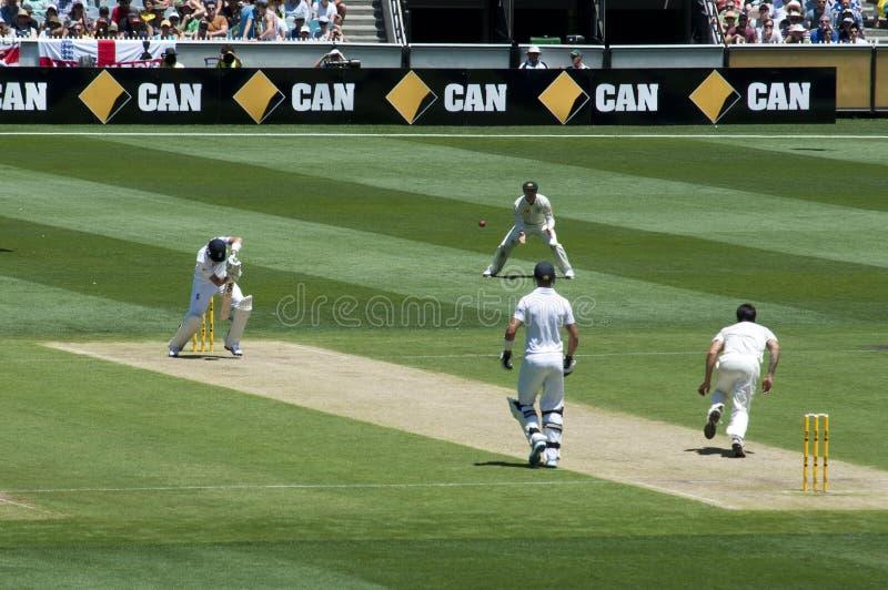 对板球运动员的常礼帽碗灰蟋蟀的 免版税图库摄影