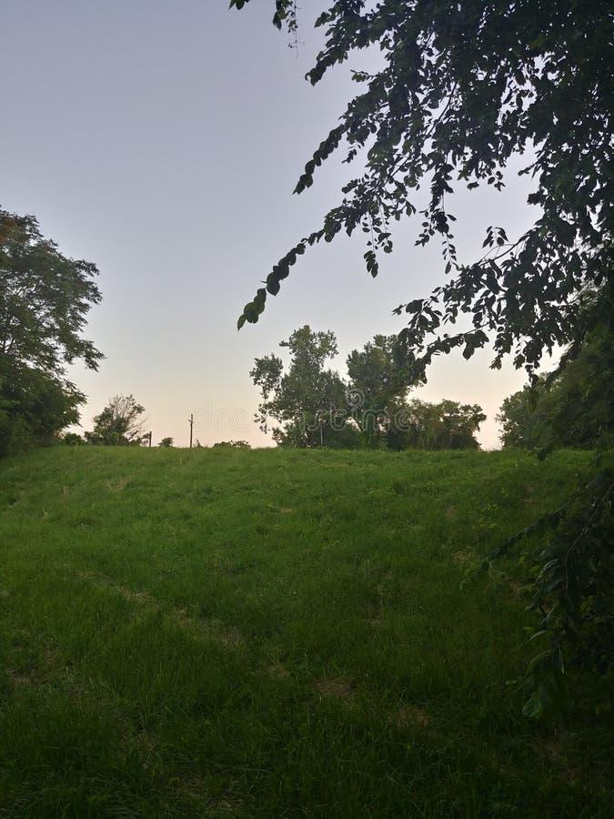对某处的草小山 库存图片