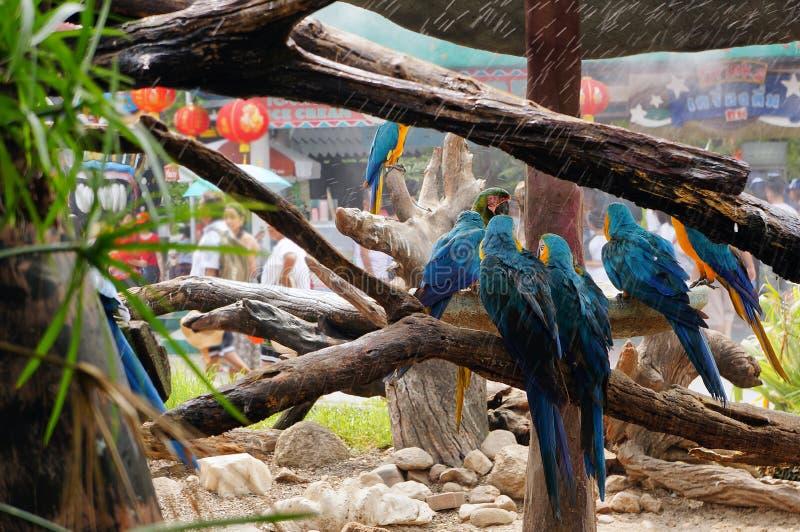 紧贴对树枝的金刚鹦鹉 免版税库存图片