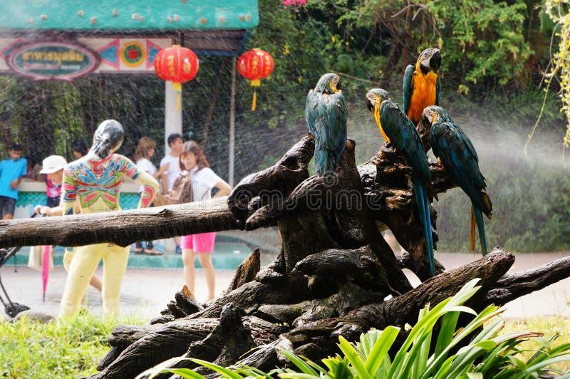紧贴对树枝的金刚鹦鹉 图库摄影
