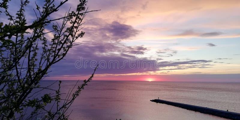 对比令人激动的背景 海晚上在桃红色,蓝色和紫色口气的日落风景通过灌木的分支 免版税图库摄影